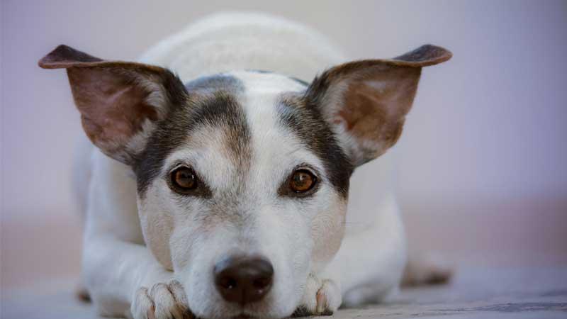 犬の尿路結石の原因