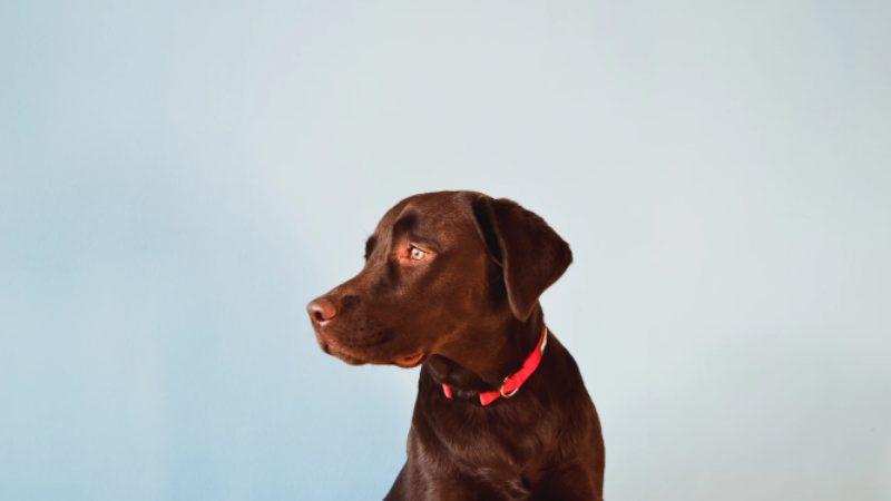 犬の尿路結石について