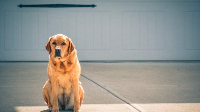 犬のお留守番は何時間まで