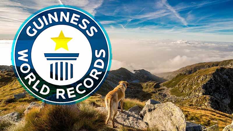 ギネス記録
