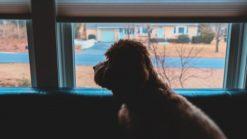 犬のお留守番
